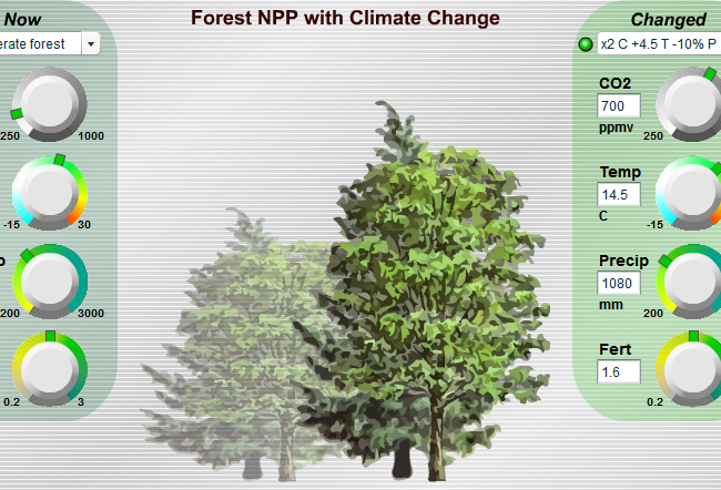 Launch Forest NPP